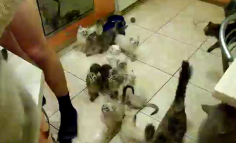 Are these cats cute or insane?