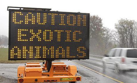 Exotic Animals Massacred in Ohio: Photos Released