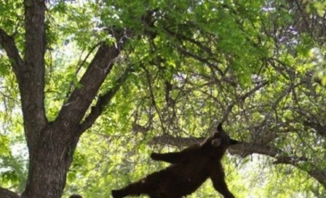Photo of Falling Bear on College Campus Defies Description