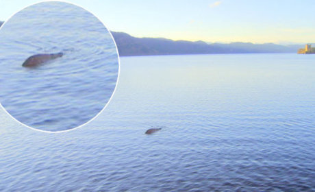 Loch Ness Monster: Captured (In New Photo, Maybe)!