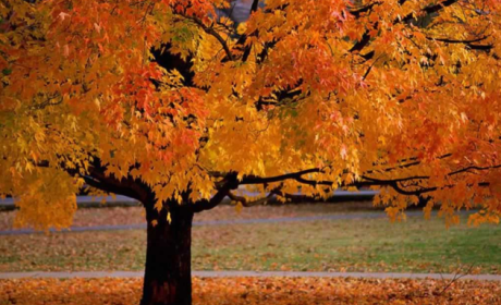 Fall Leaves: Delayed By Climate Change?