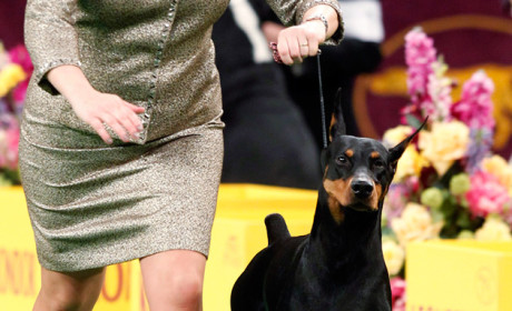 Westminster Dog Show Results: Toys, Hounds and More!