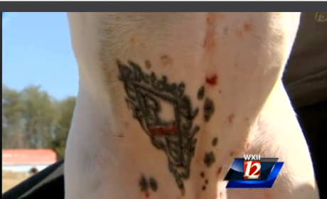 Man Tattoos Pitbull, Defends Actions as Dog Lover