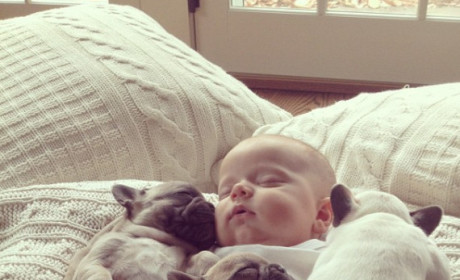 Baby Sleeps with Puppy Bulldogs, Melts Internet