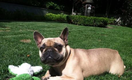 Jeremy Renner Offers $5K Reward for Lost Dog