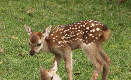 Baby Deer Delivered Via C-Section After Mother Struck By Car