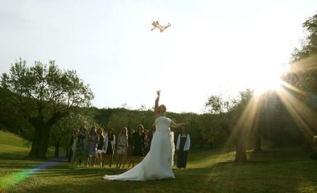 Bride Throwing Cat: Meme 2
