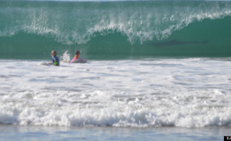 Shark Photobombs Kid Boogie Boarders: LOOK OUT!