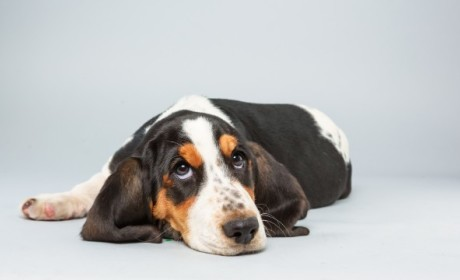 Puppy Bowl X: Meet the Players!