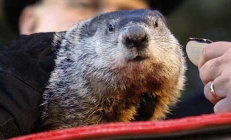 Groundhog Day 2014 Prediction: SHADOW! Winter to Continue, Punxsutawney Phil Decrees!