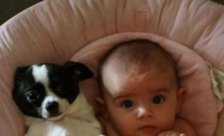 Like Pet, Like Son