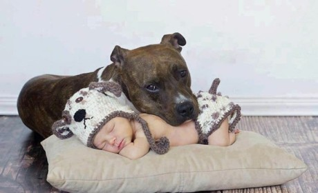 21 Photos of Babies and Pets Being the Cutest BFFs Ever