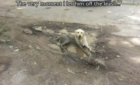 14 Examples of Dogs Acting as Man's Best, Most Frustrating Friend