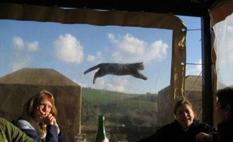 Crazy Cat Photobomb