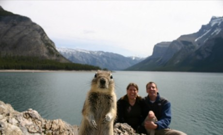 21 Animal Photobombs You Must See to Believe: Furry and Funny!