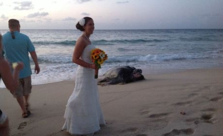 Sea Turtle Crashes Wedding, Photobombs Bride in St. Croix