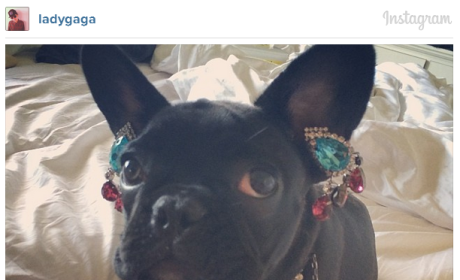 Lady Gaga Drapes Dog in Jewelry, Angers Animal Rights Activists