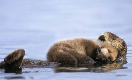 21 Pictures of Animals Acting as Parents: Otter-ly Adorable!