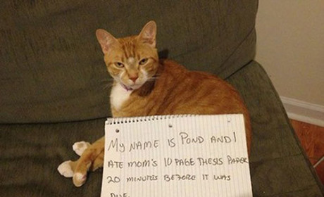 27 Naughty Cats Who Deserve Their Public Shaming