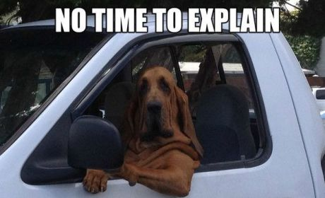 11 Dogs Who Love to Drive: Talk About a Ruff Ride!