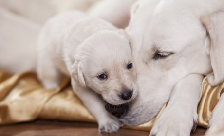 13 Pics of Puppies and Their Parents (#8 WILL Melt Your Heart!)