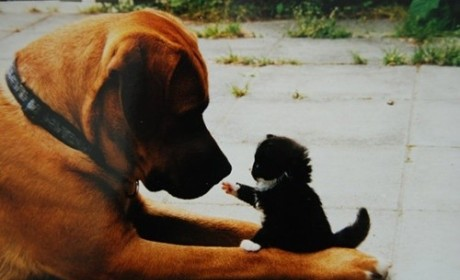 17 Cats Who Exert Dominance Over Their Dogs (#14 is Hilarious!)