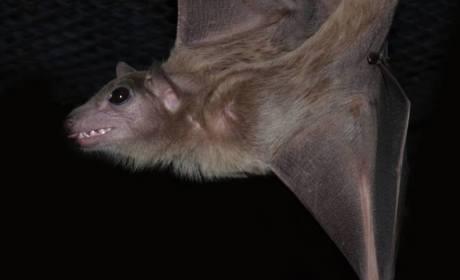One Happy Bat
