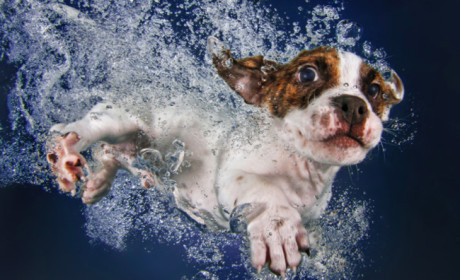 Rescue Puppies Photographed Under Water Will Be Cutest Thing You See Online Today