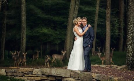 Herd of Deer Crash Amazing Wedding Photo: See It Here!