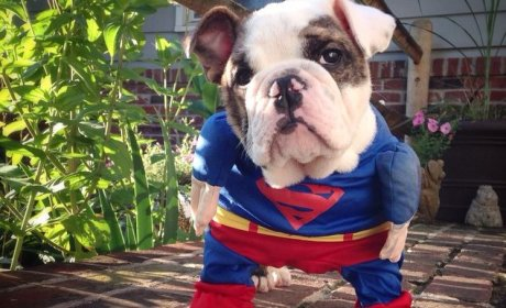 23 Cute and Cuddly Pets: IN COSTUME!