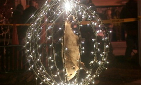 "New Year's ""Possum Drop"" to Continue in N.C., But No Longer With Live Animal"