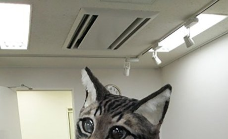 Cat Mask Photos: Prepare to be Terrified!