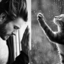 Shirtless Model Poses Imitated By Cats on Seductive, Hilarious Blog