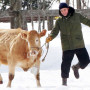 Robert Pattinson Skipping with a Cow Meme Goes Viral, Is Awesome