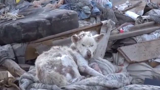 Video Dog Saved From Trash Heap Nursed Back To Health