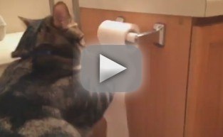 Cat Rolls Toilet Paper Back UP!