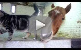 Horse and Cat Snuggle