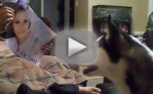 Dog Gets Freaked Out by Julia Roberts