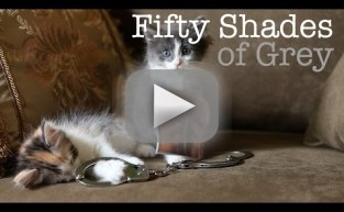 Fifty Shades of Grey Trailer: Cute Kitten Edition!