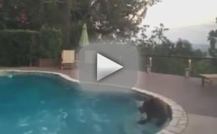 Bear Takes Dip in Family Pool