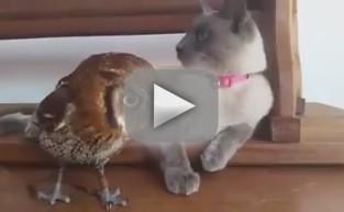 Cat Befriends Owl