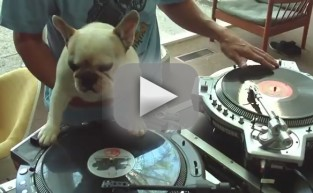 Bulldog Acts as Awesome DJ