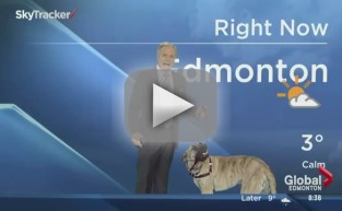 Dog Attacks Weatherman on Live TV