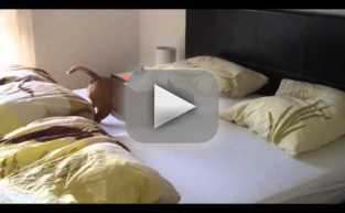 Pet Flips Out in Bed