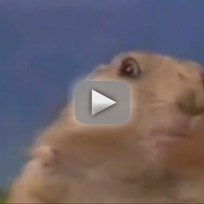 Dramatic Prairie Dog Look