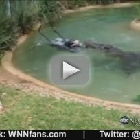 Crocodile Eating Lawn Mower