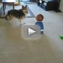 Dog Runs Around, Baby Laughs