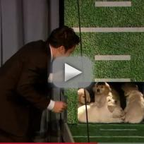Puppies Predict Super Bowl Winner