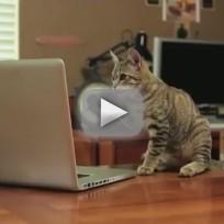 Jedi Kitten Video