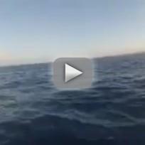 Whale Hits Canoe